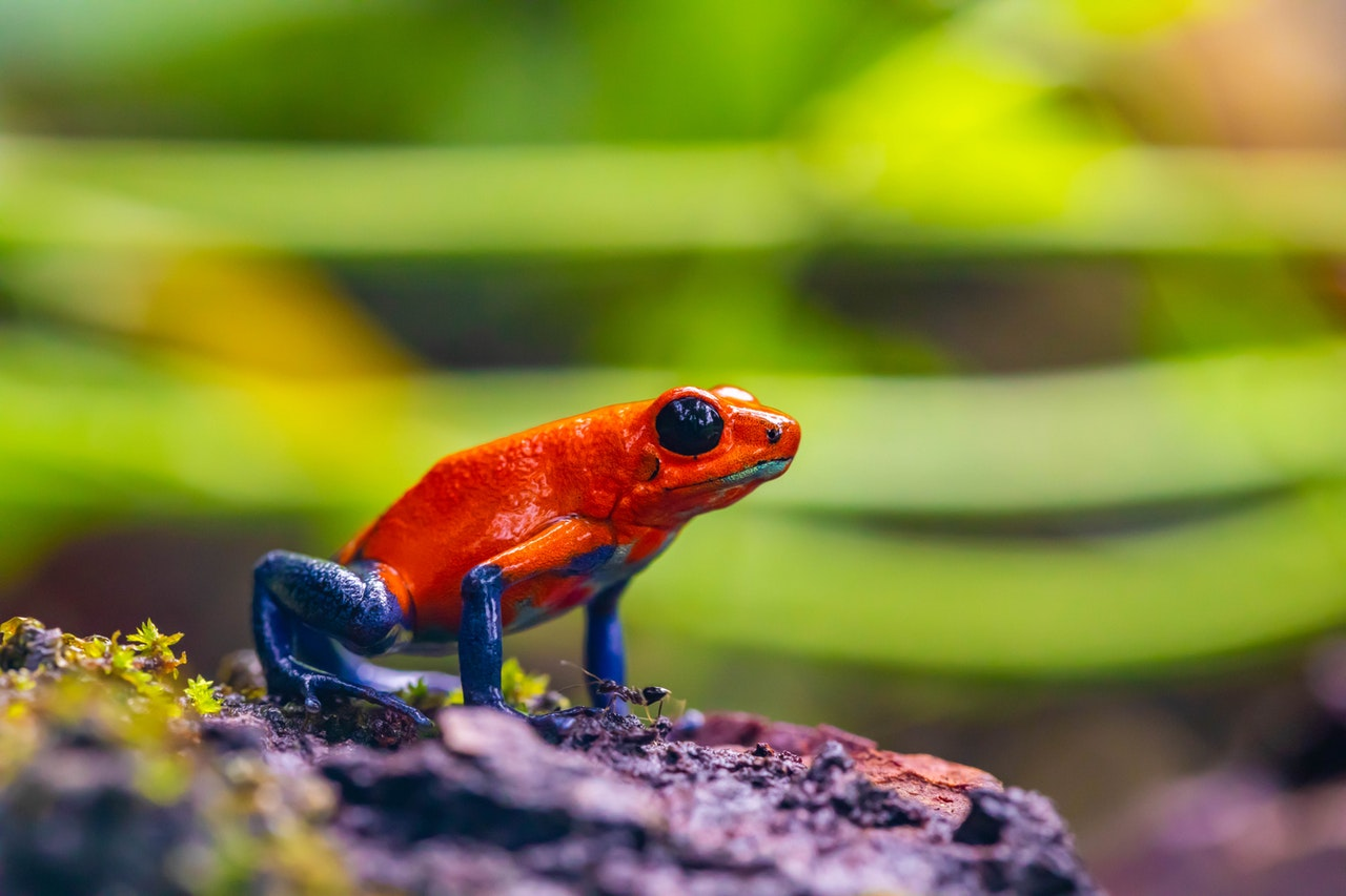 frog cells used to create living ai